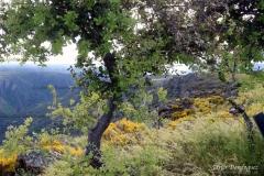 Naturaleza2-scaled