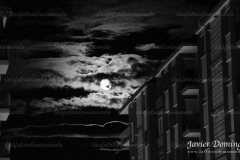 luz-de-luna-lunera-bn-scaled