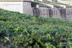 muralla-1-scaled