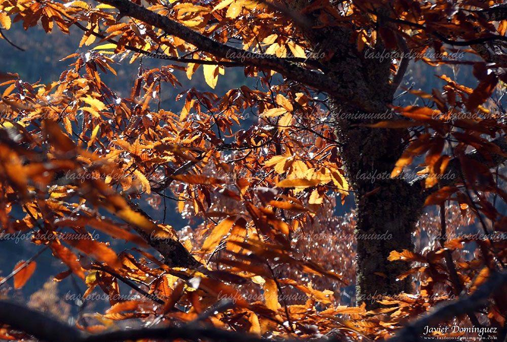 otoño enmarañado