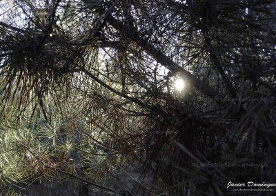 entre pinares 12