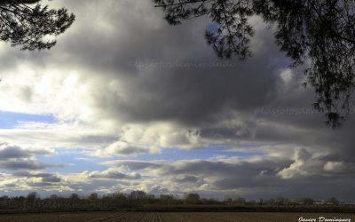 Otoño Entre Pinares.